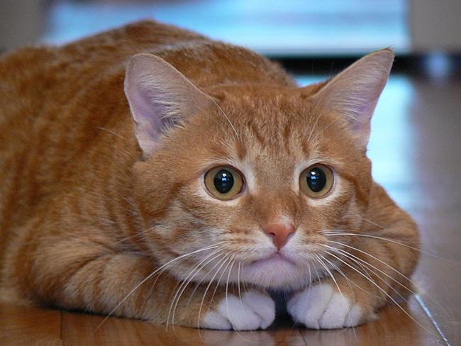 Имя кота лаки